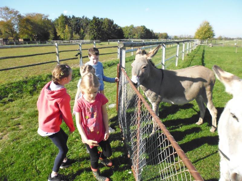 2017-10-14-13-22-32_Bilder Ausflug Bauernhof Familie Bein