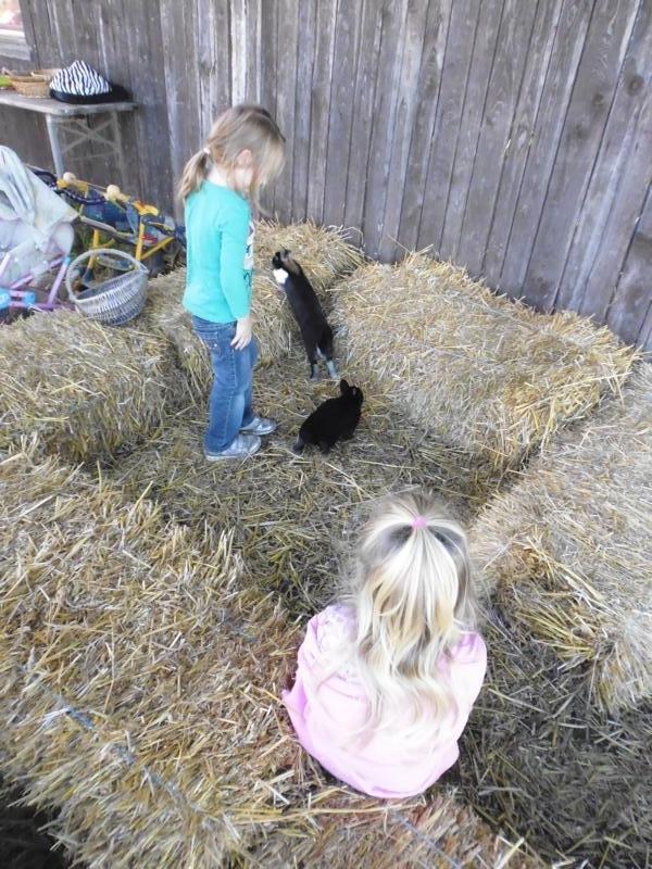2017-10-14-13-36-15_Bilder Ausflug Bauernhof Familie Bein